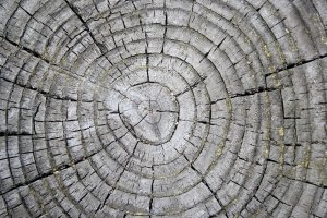 tree-rings-on-weathered-stump-texture1